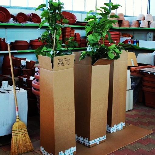 Spedizione gratuita piante ed alberi da frutta in vaso for Alberi da frutta in vaso