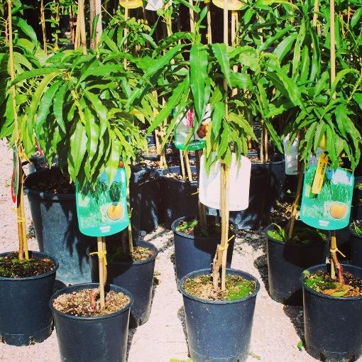 La storia e i 4 perch coltivare piante nane for Piante nane da frutto