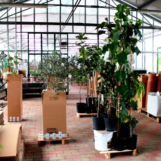 imballaggio piante da frutta dopo acquisto online
