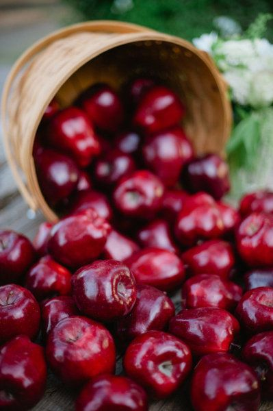 Piante Di Ciliegio Autofertili : Piante di ciliegio autofertile per il