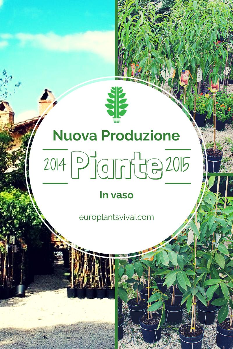 Piante nuova produzione 2014 2015 for Acquisto piante