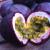Passiflora, Maracujà, Granadilla e Fiore della Passione