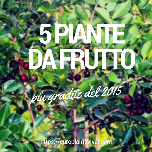 5 piante da frutto pi gradite del 2015 for Vivai piante da frutto