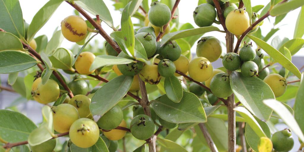 Le 5 piante da frutto piu gradite del 2015 1024x512 euro - Fratelli ingegnoli piante ...