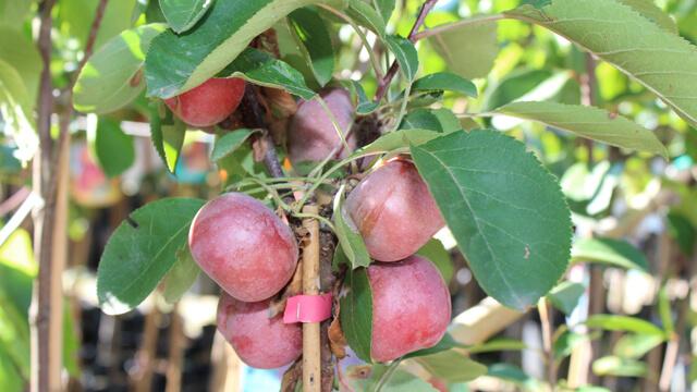breve-guida-per-coltivare-con-successo-le-piante-da-frutto-640x360