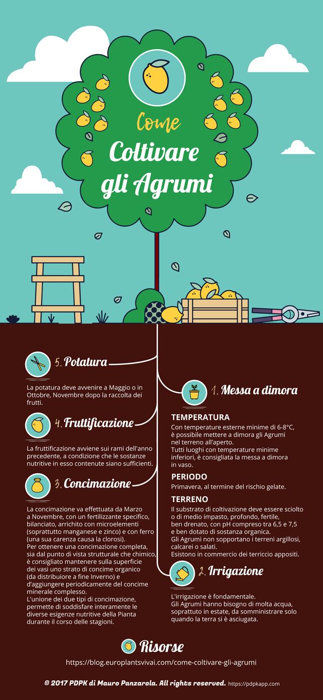 Come coltivare gli Agrumi - Infografica