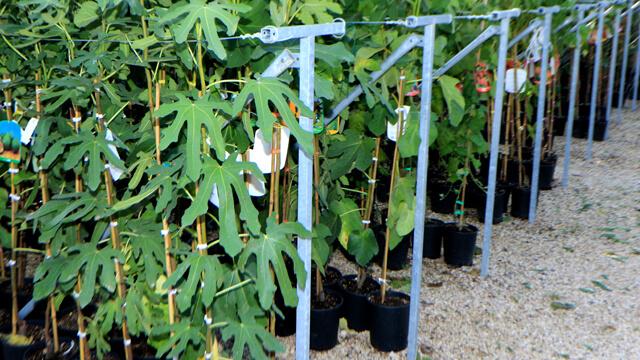 Euro plants vivai blog alberi e piante in vaso for Piante da frutto vaso