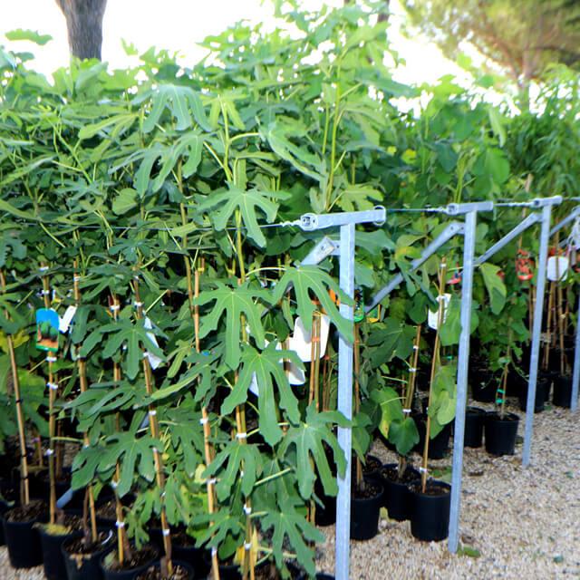 Piante Da Frutto In Vaso : Nuova esposizione per le piante da frutto vaso euro